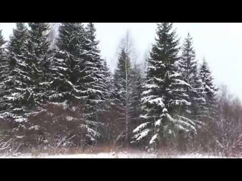 Видеозарисовка Зимний день