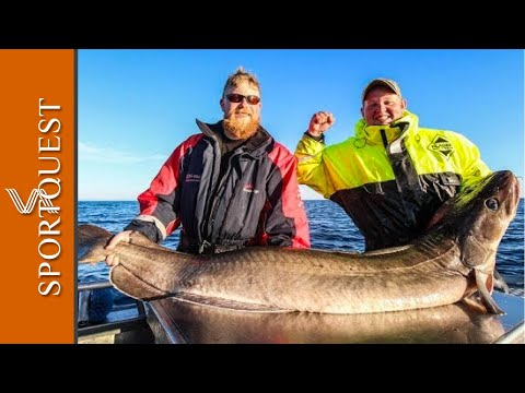 Vesterålen Norway Sea Fishing