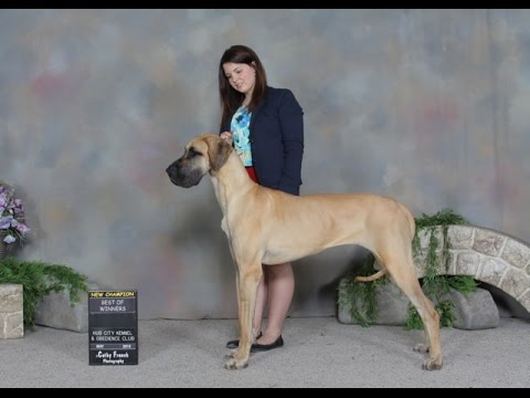 The story of a woman and her first show dog