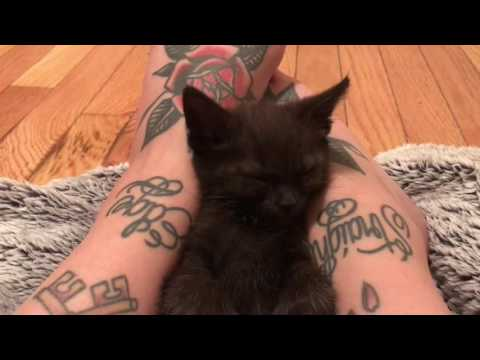Sleepiest Kittens of All Time