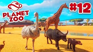 OSTRICHES! - Planet Zoo #12 w/ Vikkstar