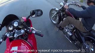 Покатушки в Тюмени. Сибиха, SV и дикие сибирские собаки