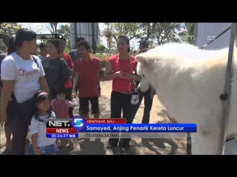 Festival Anjing Peliharaan Di Denpasar - NET5