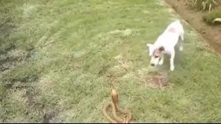 The Smartest Dog Or Snake !