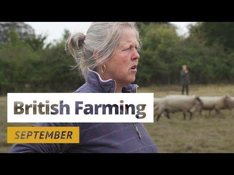 British Farming | 12 Months On A UK Farm: September