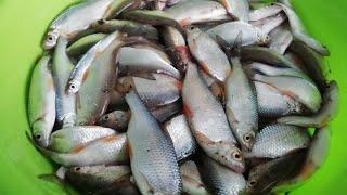 Рыбалка на Чёртовой яме Река Чарыш 15 03 2021