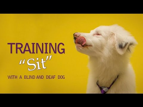 Training Your Deaf and Blind Dog to Sit!