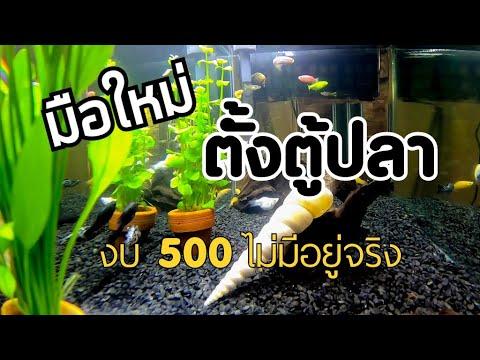 มือใหม่ตั้งตู้ปลา ซื้อตู้ปลาที่จตุจักร หลังโควิด ควรมีงบเท่าไร | งบ 500 ไม่มีอยู่จริง