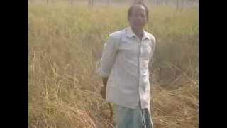 Rice cultivation in rainy season of 2013,West Bengal,Falta Block,vill-Pakurdigra