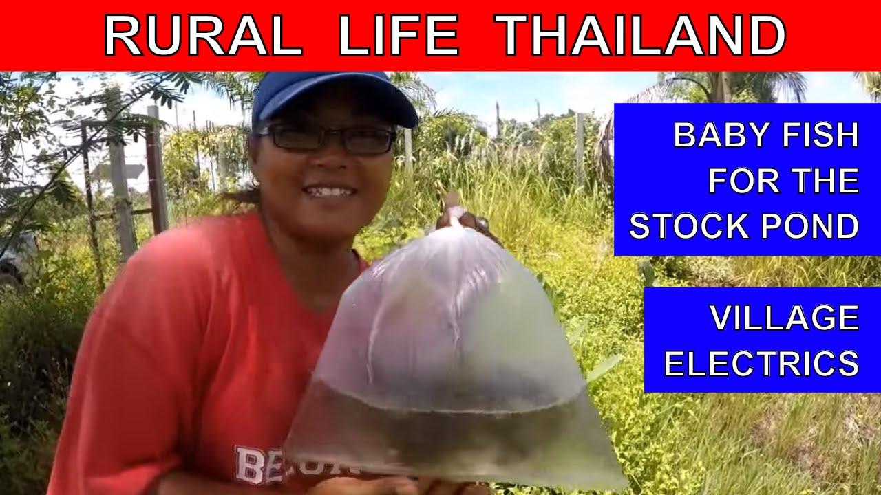 Thai village electrics thai fish pond rural life for Garden pond electrics