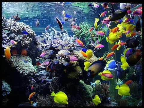 Pecera marina youtube for Comida para peces tropicales acuario