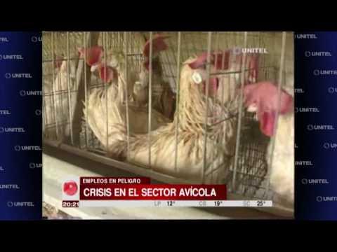 Sector avícola solicita una reunión con el gobierno para tratar problemas