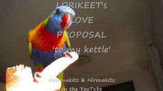 Lorikeet's Love Proposal 'to My Kettle'!