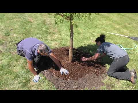 Best Practices - Mulch Ring