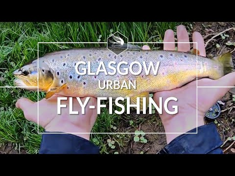 URBAN FLY-FISHING | GLASGOW SOUTHSIDE | BIG TROUT!!!!