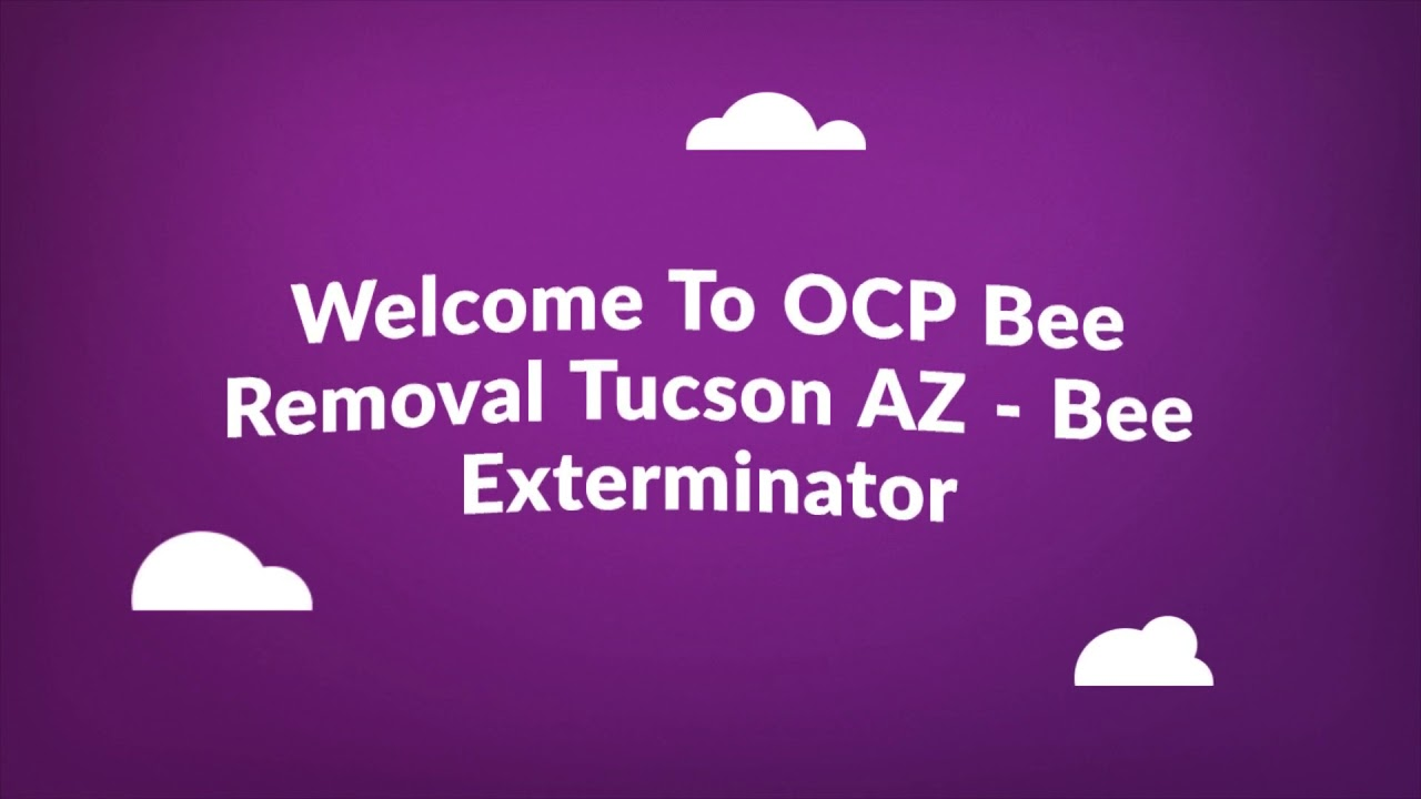 Certified OCP Bee Removal in Tucson, AZ