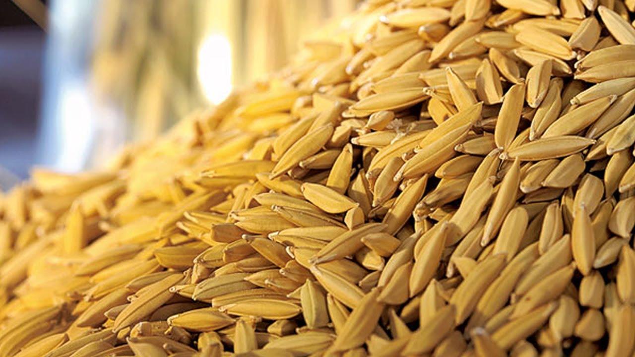 Indicador do arroz rompe patamar inédito dos R$ 100 /sc , com maior consumo interno e exportações