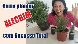 Como Plantar Alecrim com Sucesso