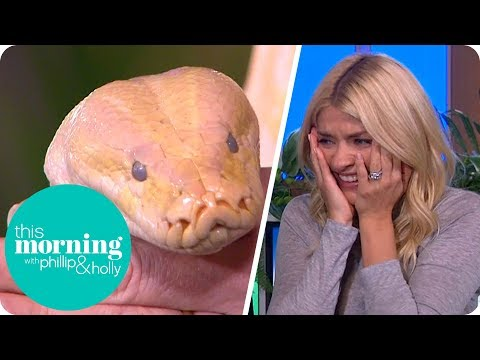 Holly Is Left in Tears as a Huge Snake Wraps Around Her Leg! | This Morning