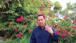 видео Чудлен. Практика разрушения привязанности к пище