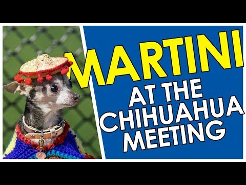 2017 Chihuahua Meeting in St-Hyacinthe