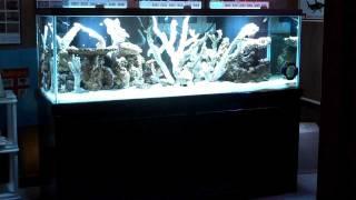 180 Gallon Reef Tank Build: Part 1