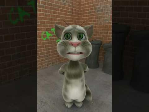 Gara gara WA sepi , dimarahi ama kucing , malu !!! Hhhhhhh