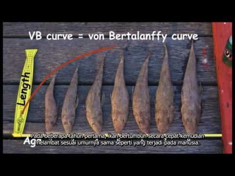 Fisheries Stock Assessment Modelling Video 04 - Age And Growth (Indonesian)