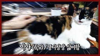[자동&호야미야] 궁디팡팡은 싫어하지만 대답은 잘하는 고양이