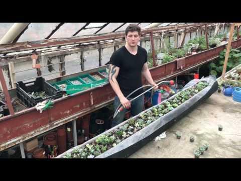 Мастер Георгий Аристов создаёт уникальную композицию из суккулентов в бревне