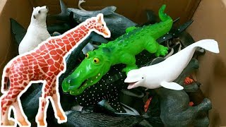 Learn Wild Zoo Animals and Sea Animal Names - Shark Toys For Kids