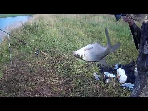 Рыбалка на притоках Западной Двины. Рыбалка в Витебской области)