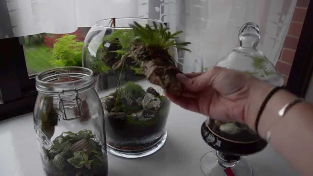 Orchids In Terrariums Youtube