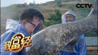 《致富经》 20190531 集体失踪的鱼 一年带回3000万元| CCTV农业