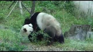台北市立動物園(熊貓)團團圓圓
