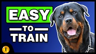 These 10 Dog Breeds are Easier to train than you thought!