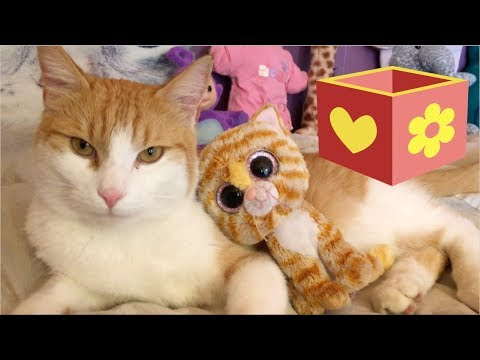 Video for children to watch and learn  | Bellboxes | Cute Cat