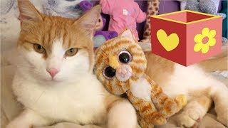 Video for children to watch and learn  |  Cute Cat part one | Bellboxes | 1 |