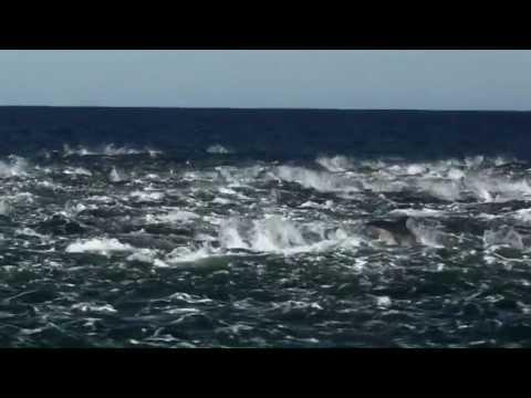 A Marine Big 5 Safari! | Dyer Island Cruises