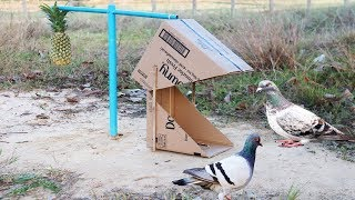 Smart Bird Trap Using Cardboard Blue pipe and a Pineapple fruit