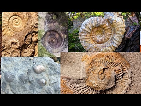 How To Find Fossils In Your City! Midwest Fossil Hunting