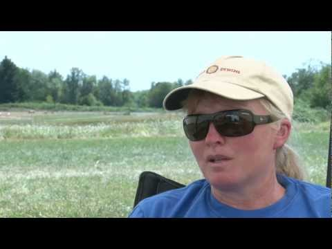 What is lure coursing?