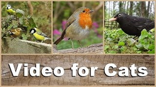 Videos for Cats to Watch - Beautiful Birds Singing and Chirping NEW