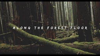 Along The Forest Floor [OFFICIAL VIDEO] - Philip G Anderson