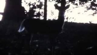 Once in a lifetime freak bird shot while bow hunting