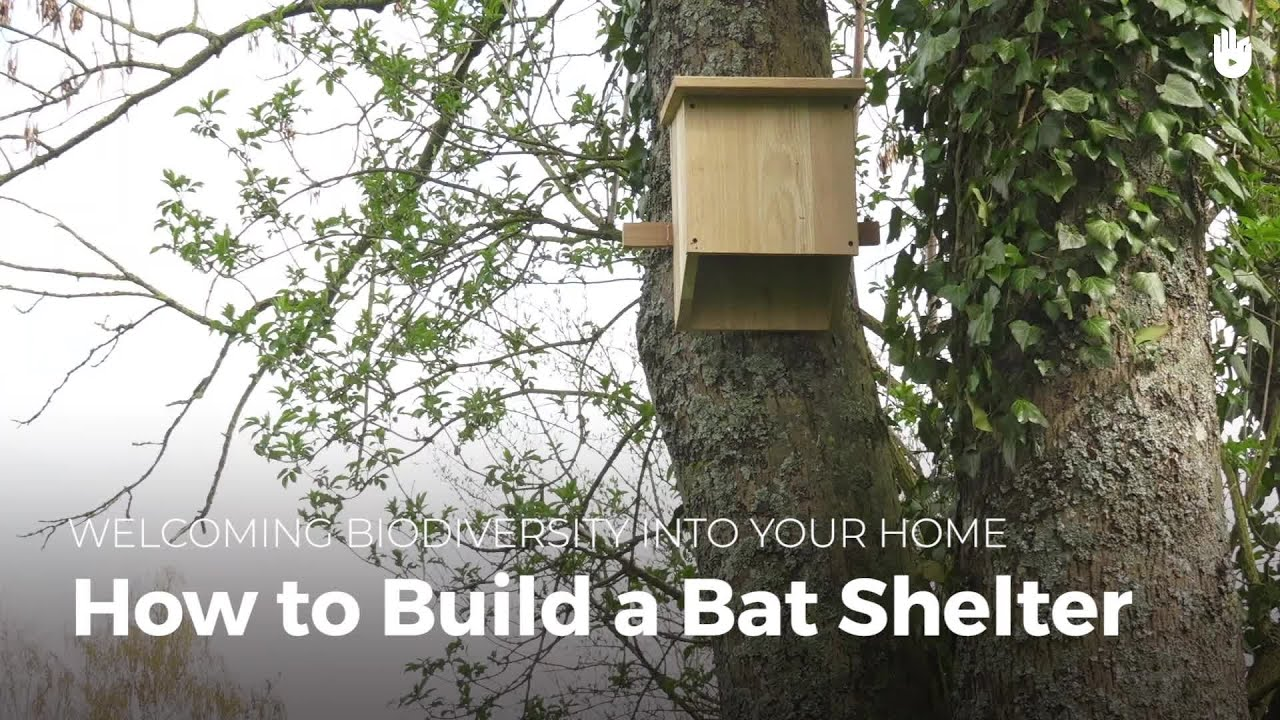 How to build a bat house biodiversity youtube for How to make a bat house free