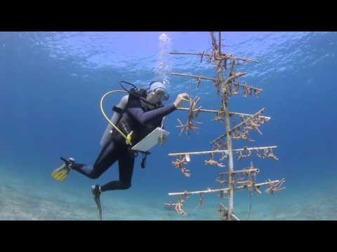 TRH visit to Little Cayman Research Centre - Central Caribbean Marine Institute 2016