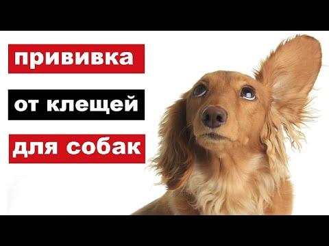 Прививка от клещей для собак. Эффективность, безопасность и стоимость.