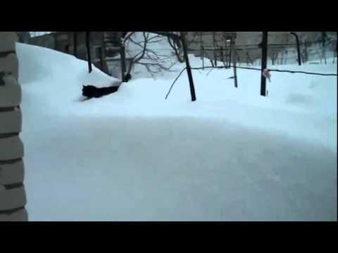 Кот спецназовец проберется по снегу