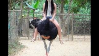 O Estranho Avestruz A Maior Ave da Terra Replay